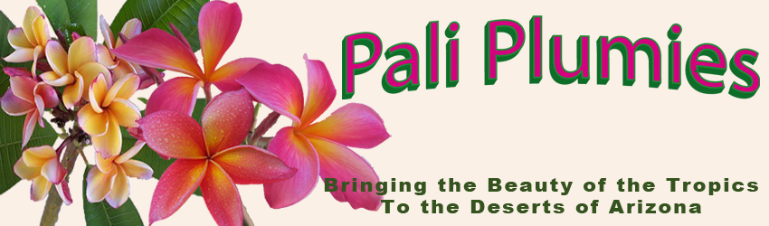 Pali Plumies - Bringing the Beauty of the Tropics to the